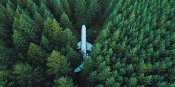 Plane in Trees